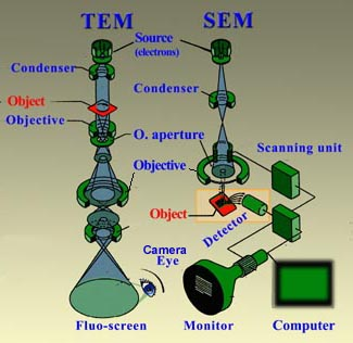 Image formation in a TEM and SEM