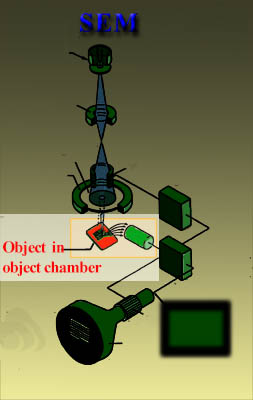 object chamber of the fesem