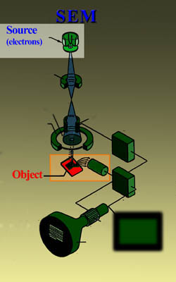 Source of electrons in a SEM