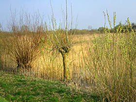 Spring vegetation in the Groenlanden