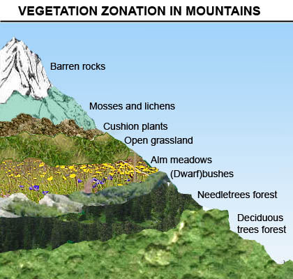 zonation coursework However, there are some general patterns of zonation a typical zonation pattern includes back reef or reef flat, reef crest or algal ridge, and seaward slope or fore-reef.