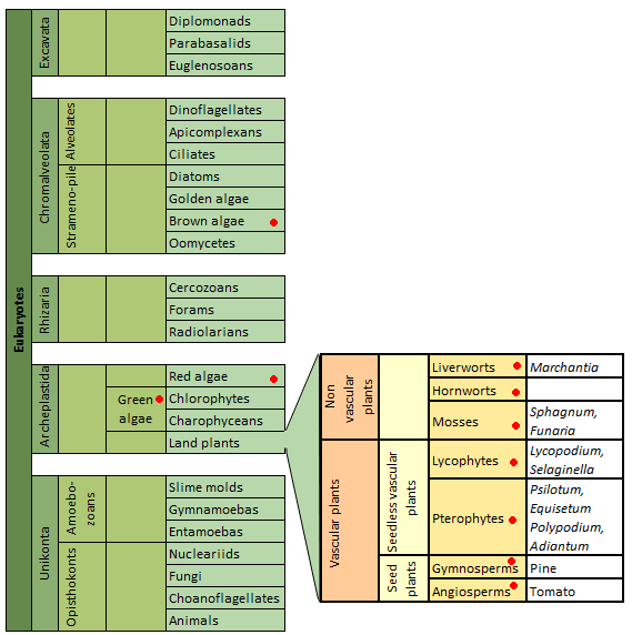 algae mcqs pdf